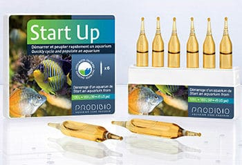 Prodibio Startup 6Amp