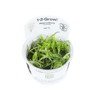 Tropica Heteranthera zosterifolia 1-2-Grow!