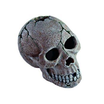 Haquoss Human Skull 1