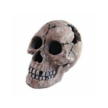 Haquoss Human Skull 2