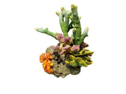 Coral rock 6