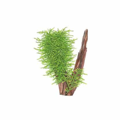 "Tropica Taxiphyllum ""Spiky"" Portion"