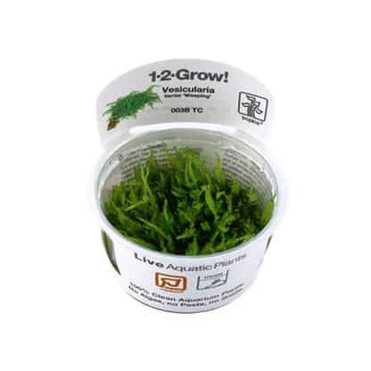 Tropica Weeping Moss 1-2 grow!!