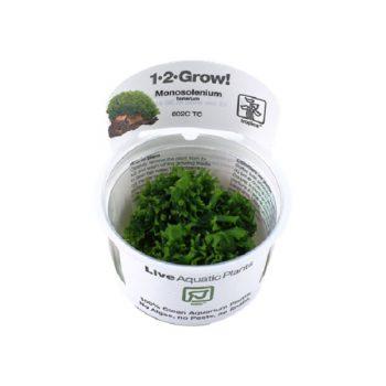 Tropica Monosolenium Tenerum 1-2 Grow!