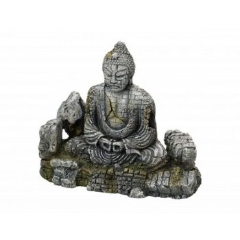 Aqua Della Buddha