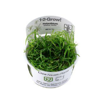 Tropica Helanthium Tenellum 'Green'