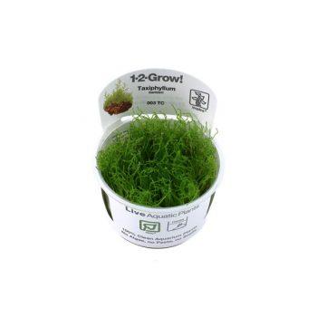 Tropica Taxiphyllum barbieri 1-2-grow