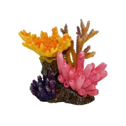 Haquoss Reef Dream 4
