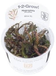 TROPICA Hygrophila pinnatifida 1-2...