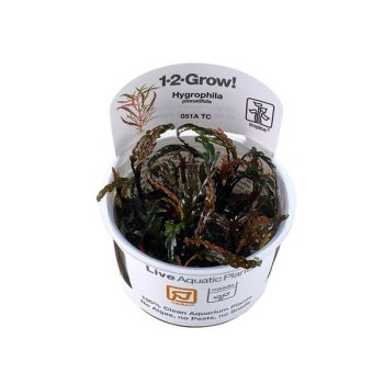 Tropica Hygrophila Pinnatifida 1-2 Grow
