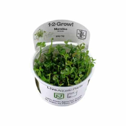 Tropica Marsilea Hirsuta 1-2-Grow!
