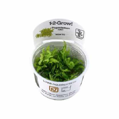 Tropica Pogostemon Helferi 1-2 Grow