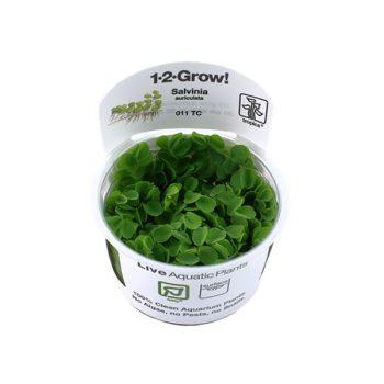 TROPICA Salvinia Auriculata 1-2 Grow