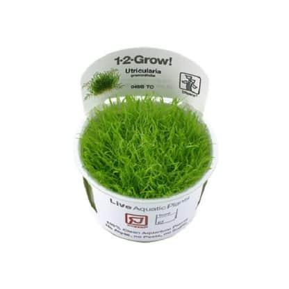 Tropica Utricularia Graminifolia 1-2-Grow!