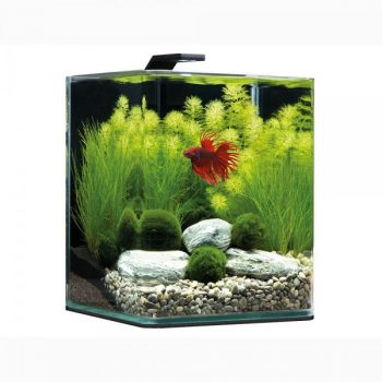 DENNERLE Nano BettaCube 10L – Style LED S
