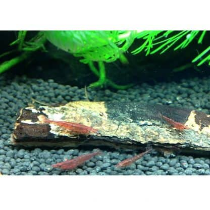 Dennerle Catappa Bark 12cm
