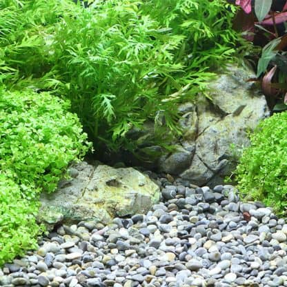 Dennerle Natural Gravel Plantahunter River S