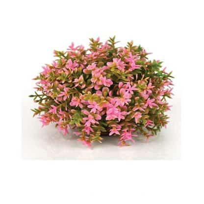 Oase Flower Ball Pink