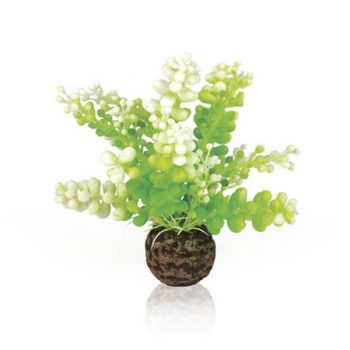 OASE Aquatic Caulerpa Green