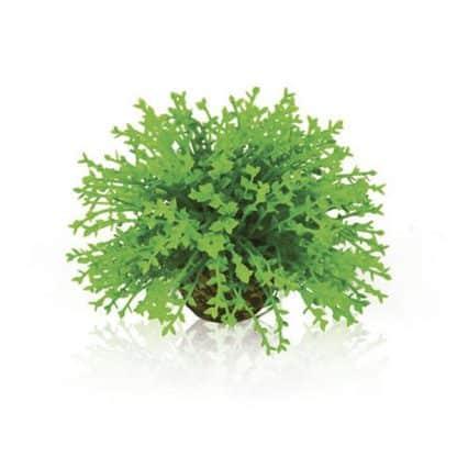 Oase Flower Ball Green