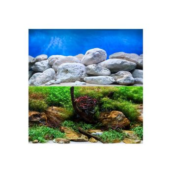 Aquatic Garden/Bright Stone Background