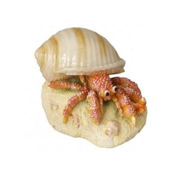 Aqua Della Hermit Crab