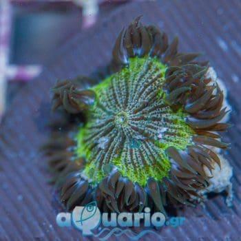 Rock flower 1