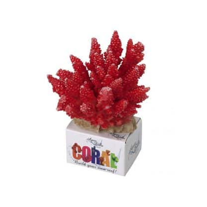 Aqua Della coral acropora red M. 11.5×10.5x9cm