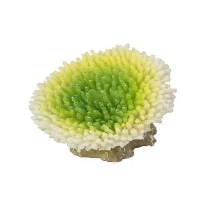 Aqua Della Coral acropora efflorescens lime 10.5x9x8cm