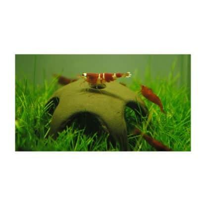 Aqua Nova Shrimp star 50mm