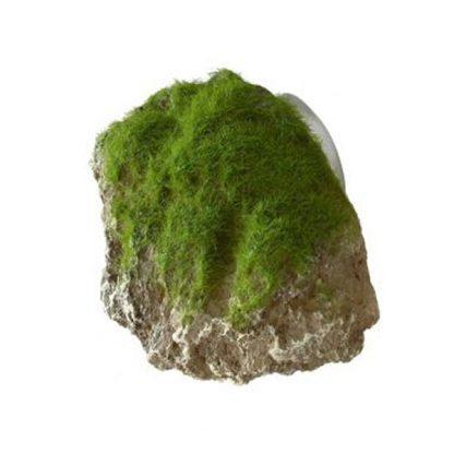Aqua Della Moss Stone XS 9x6x6,5cm