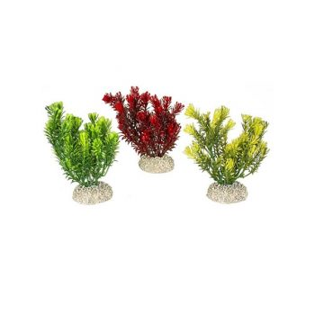 Aqua Della Plants Canandesis Set S natural 13cm assorted
