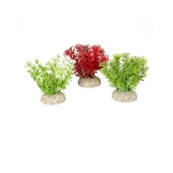 Aqua Della Plants Hottomia 10cm assorted