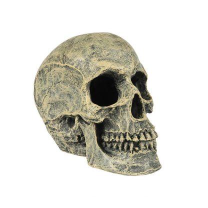 Aqua Della Skull Head 16×10,5×13,20cm