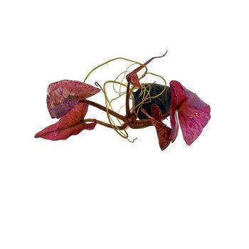 Aquaflora Nymphaea Zenkeri Red