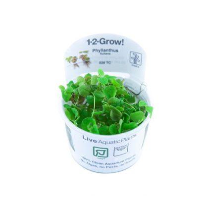 Tropica Phyllanthus fluitans 1-2-Grow!