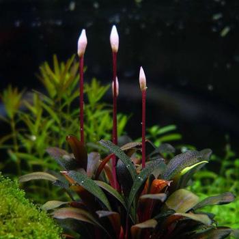 Φυτά για Ενυδρεία