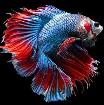 Ψάρια Γλυκού