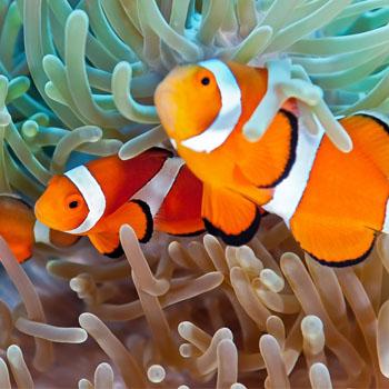 Ψάρια Θαλασσινού