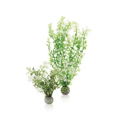 Oase Biorb Winter Flower Set